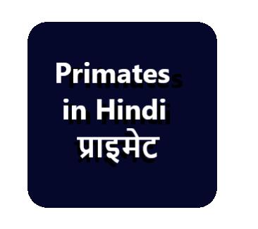 Primates in Hindi प्राइमेट